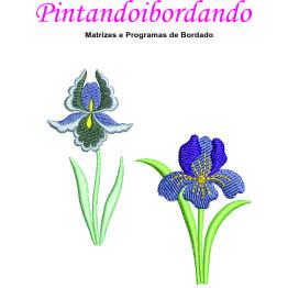 Matrizes De Bordado Orquídeas Lindas - 13 Matrizes